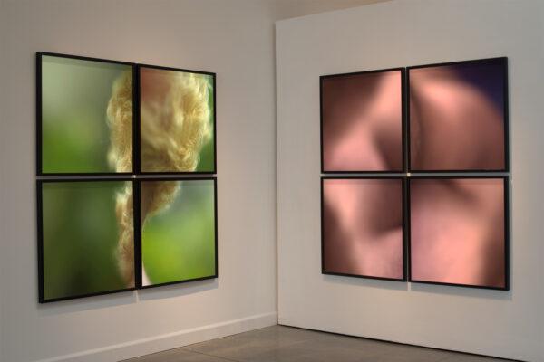 Installation view A Bouquet of Bears & A Dozen Little Roses (2014) by Chris Komater. Framed digital C-prints, 61 x 61 each