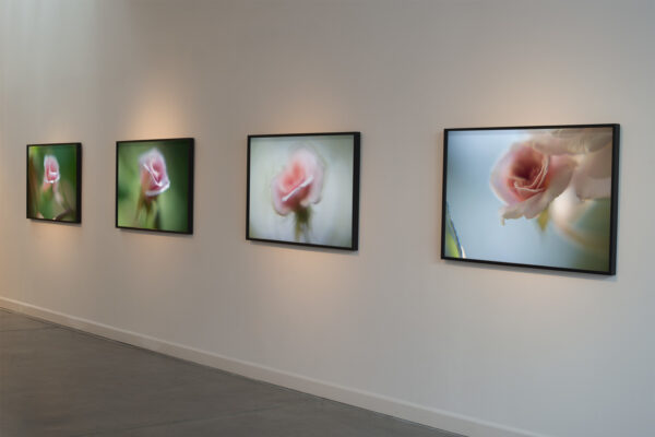 Installation view A Bouquet of Bears & A Dozen Little Roses (2014) by Chris Komater. Digital C-prints, 30 x 45 each